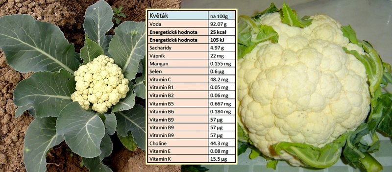cauliflower-1495104